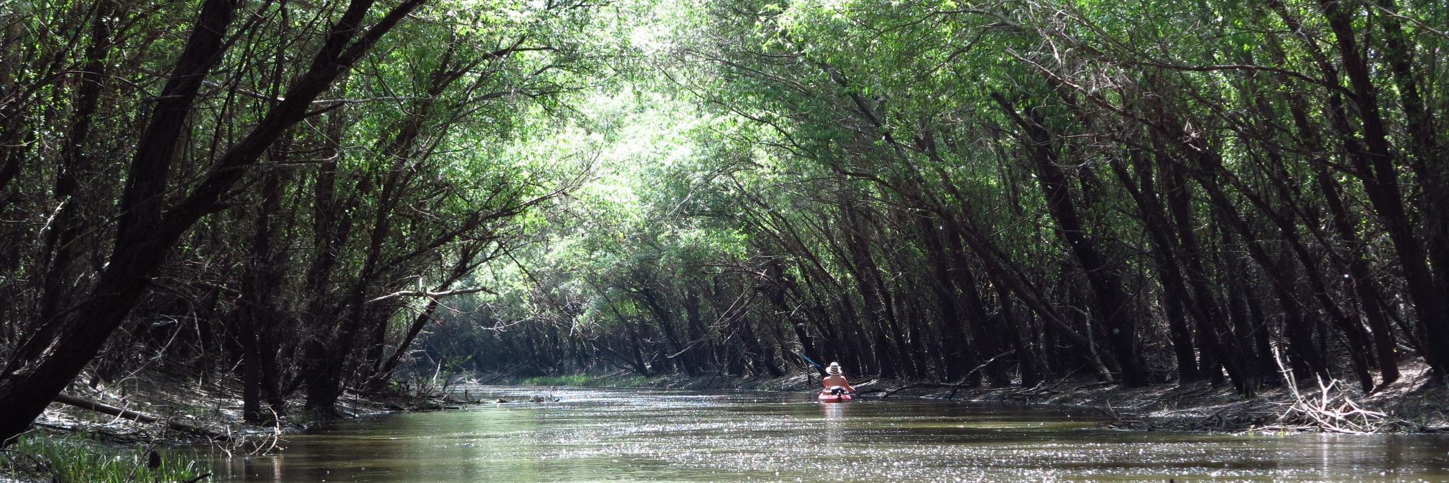 Zagyva - Kajakozás a bájos zöld folyón